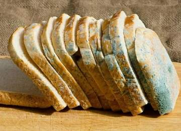 Küflü Ekmek