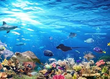 okyanus yaşamı