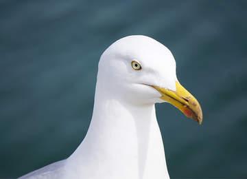 Albatros kuşu