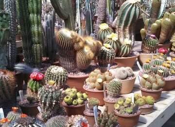 Bitkilerle Yaşamak İnsanlara Neden İyi Gelir?
