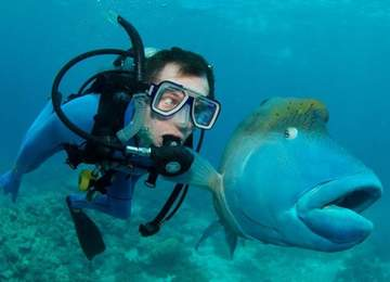 Korkan balık