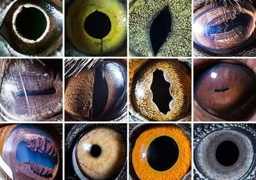 Hayvanların Göz Bebekleri