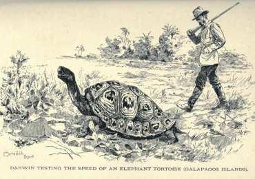 darwin ve galapagos adaları 2d çizim