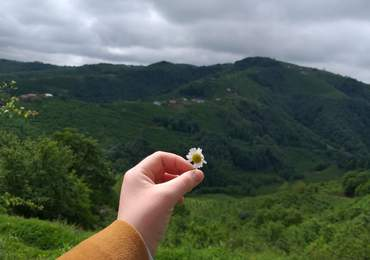 Çiçeğin savruluşu