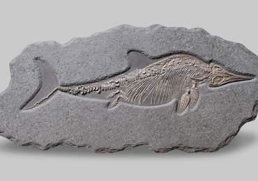 Stenopterygius Fosili