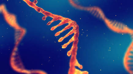 RNA (Ribonükleik Asit)