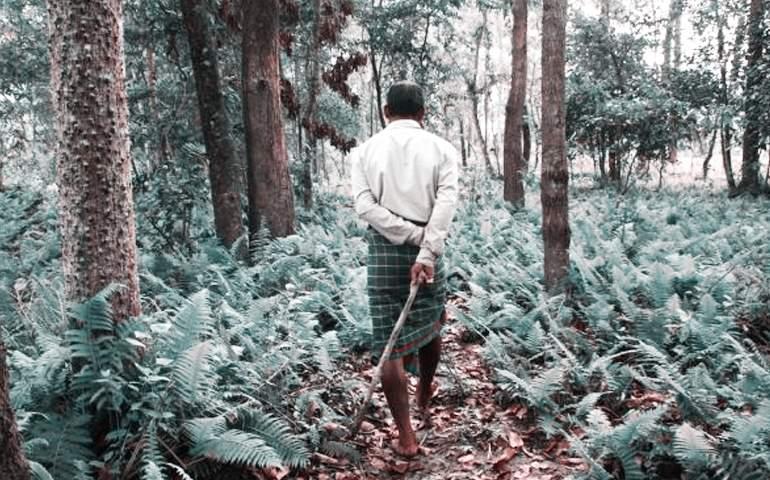 hindistanda 37 yıl sonra orman olan alan