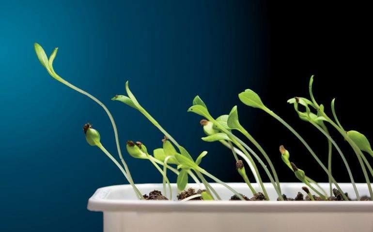 ışığa doğru büyüyen bitkiler
