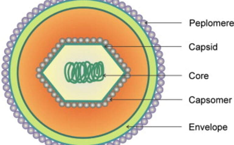 Virus yapısı